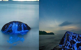 Nếu biết ánh sáng xanh trên bờ biển này phát ra từ đâu, hẳn bạn sẽ vô cùng kinh ngạc đấy