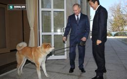 """""""Nhật Bản đã chọn thời điểm tồi tệ nhất để mềm mỏng với Nga"""""""