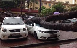 Những con số thiệt hại khủng khiếp sau cơn bão số 3