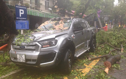 2 ô tô bị cây đổ đè trúng ở Hà Nội