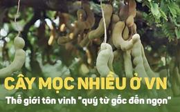 Giải độc, giải rượu cực tốt, quả này được thế giới tôn vinh nhưng người Việt vẫn bỏ phí