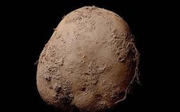 Bức ảnh củ khoai tây này trị giá tới 1 triệu USD