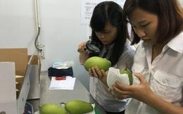 Rau quả ruộng đồng Việt xuất khẩu đã vượt dầu thô