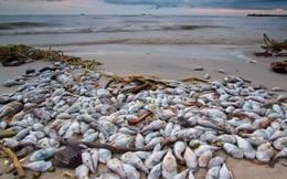 [CHÙM ẢNH] Tận thấy hiện tượng có thể là nguyên nhân cá chết hàng loạt ở VN