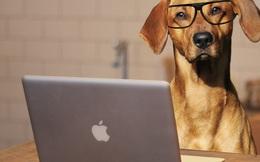 Sắp có công nghệ giúp bạn nói chuyện với chó