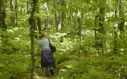 Nếu chẳng may bị lạc trong rừng, đừng bao giờ quên các kỹ năng tối thiểu sau