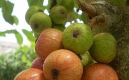 5 loại trái cây cực tốt, ngay cả người mắc ung thư cũng nên ăn nhiều