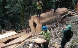 Nữ cán bộ huyện ở Nghệ An bị xử phạt vì thuê người chặt phá rừng