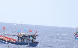 Hai tàu nước ngoài đâm chìm tàu cá Quảng Ngãi