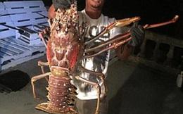 Ngư dân bắt được tôm hùm khổng lồ nặng đến 6,3kg