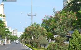 Bí thư Đà Nẵng yêu cầu Giám đốc Sở sang Trung Quốc học trồng hoa ngay tại cuộc họp