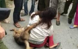 Số phận những kẻ trộm chó và lời thỉnh cầu các nhà làm luật