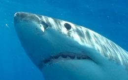 Trong top 15 động vật nguy hiểm nhất Trái Đất, cá mập chỉ đứng bét bảng