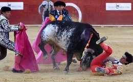 Kinh hoàng khoảnh khắc đấu sĩ bị bò tót húc chết ngay trên sóng truyền hình trực tiếp