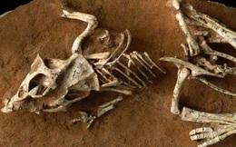 Giả thuyết mới về nạn tuyệt chủng của khủng long