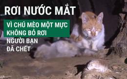 [VIDEO] Chú mèo quyết không bỏ rơi người bạn đã chết gây xúc động