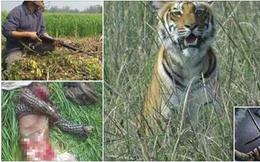 Sổng chuồng, hổ dữ vồ chết 6 người dân