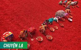 Mãn nhãn với những bức ảnh tuyệt đẹp trong mùa thu hoạch ớt ở Bangladesh