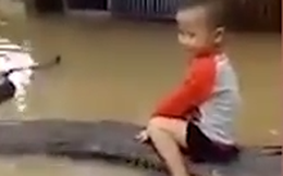 Thực hư bé trai 3 tuổi ở Thanh Hóa cưỡi trăn khủng giữa nước ngập, coi như thú cưng trong nhà