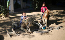 24h qua ảnh: Trẻ em Palestine cưỡi động vật chết khô trong vườn thú