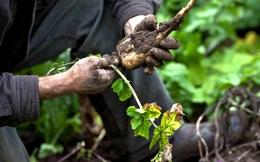 81,6 tỉ USD và những con số ấn tượng về nền nông nghiệp hữu cơ trên thế giới