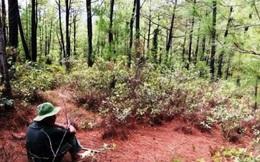 Kỳ 1: Lần tìm đường dây 'cò' đất mộ trong rừng đặc dụng
