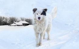 Bị mẹ bỏ rơi 2 ngày giữa trời lạnh -12 độ, cậu bé 2 tuổi sống sót kỳ diệu nhờ một chú chó