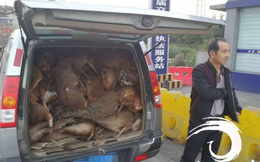 Chặn chiếc xe lại để kiểm tra, cảnh sát phát hiện cảnh tượng đáng sợ bên trong