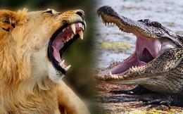 """Thời tiền sử bộ hàm cá sấu đã hơn khủng long bạo chúa, thời nay sư tử cũng """"chào thua"""""""