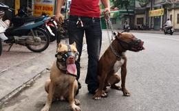 6 thắc mắc về chuyện bắt chó thả rông và lời giải đáp hút nghìn like