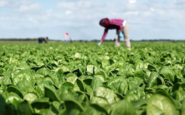 """Từ trang trại đến bàn ăn: Không chỉ ở VN, người Pháp cũng rất """"thèm"""" thực phẩm hữu cơ"""
