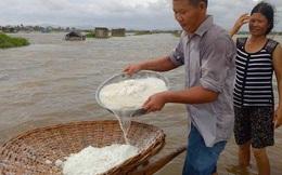 Nước ngập trắng đồng, diêm dân nháo nhào đi cứu muối trong biển nước