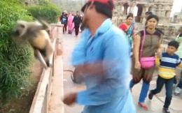 Clip nam du khách thẳng tay tát vào mặt chú khỉ đáng thương gây phẫn nộ