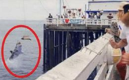 Hải cẩu vừa được phóng sinh đã phải đón nhận thảm kịch không thể tồi tệ hơn