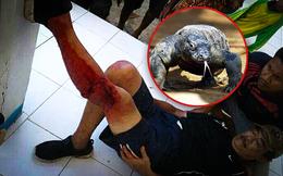 Phớt lờ cảnh báo, một du khách bị rồng Komodo tấn công dã man