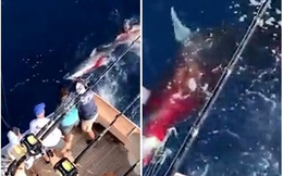 Săn bắt cá mập theo cách tàn bạo, vị thương gia giàu có nhận được điều không mong muốn