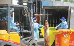 Vụ gần 4.000 con heo bị tiêm thuốc an thần: 25 cán bộ thú y bị kỷ luật