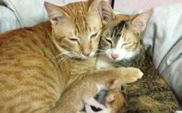 Bộ ảnh chú mèo đứng canh chừng, chờ vợ đẻ gây sốt mạng xã hội Việt