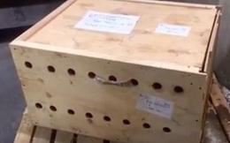 Mở thùng gỗ bí ẩn bị giữ suốt 7 ngày, nhân viên sân bay kinh ngạc khi thấy thứ bên trong