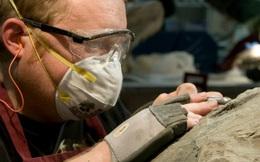 Phát hiện bất ngờ từ mẫu hóa thạch khủng long hoàn hảo, được ví như Mona Lisa