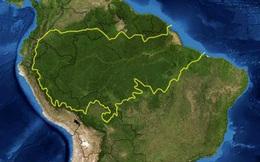Phát hiện nguy cơ các loài bị tuyệt chủng tại cánh rừng nhiệt đới đa dạng nhất thế giới