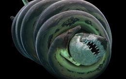 """""""Quái vật"""" rắn khổng lồ Titanoboa nặng hơn 1 tấn được tìm thấy như thế nào?"""