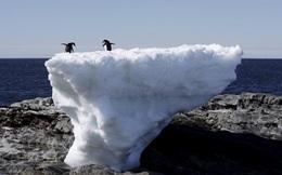 """Nhiệt độ Nam Cực chạm ngưỡng kỷ lục, giới khoa học """"đứng ngồi không yên"""""""