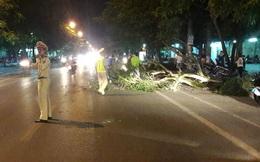 Nghệ An: Cây lớn bất ngờ bật gốc đè trúng một phụ nữ đi xe máy trên phố