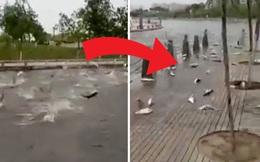 """Chuyện lạ: Hàng trăm con cá nhảy lên bờ """"tự sát"""" và nguyên nhân bất ngờ hé mở"""