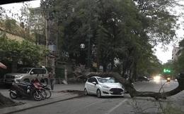 Hà Nội: Cây cổ thụ đổ đè bẹp ô tô lúc rạng sáng