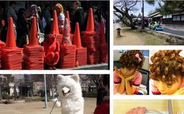14 điều kỳ quặc mà bạn chỉ có thể tìm thấy ở Nhật Bản