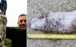 Người dân lo lắng khi phát hiện những con chuột dài gần nửa mét