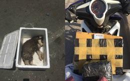 Sự thật bức ảnh chú chó nhỏ chết trong thùng xốp được gửi xe khách từ Nam ra Bắc