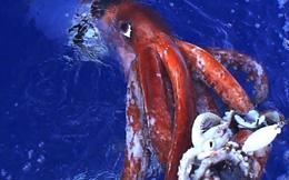 6 sinh vật lớn nhất trên hành tinh